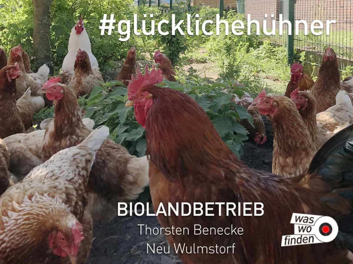 Glueckliche Hühner - Biolandbetrieb Benecke Neu Wulmstotf