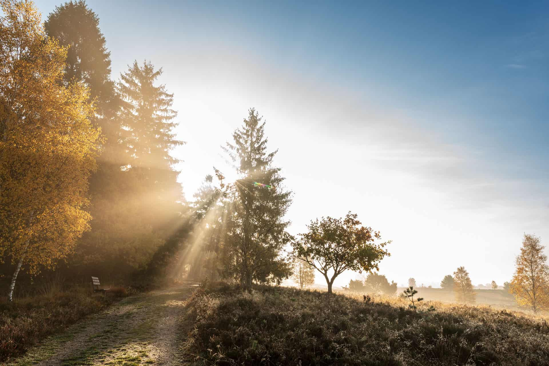 Weseler Heide im Herbst