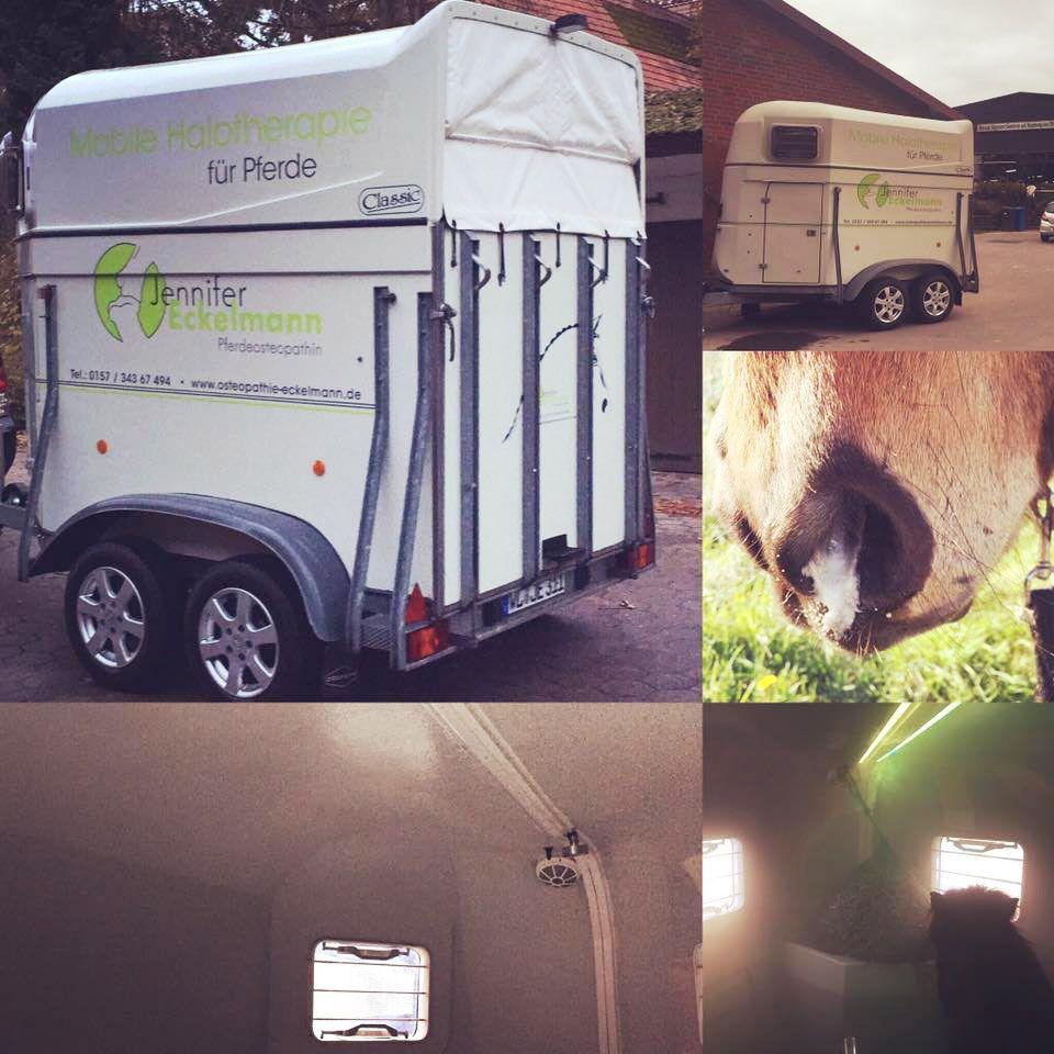 WasWoFinden Pferde Soletherapie