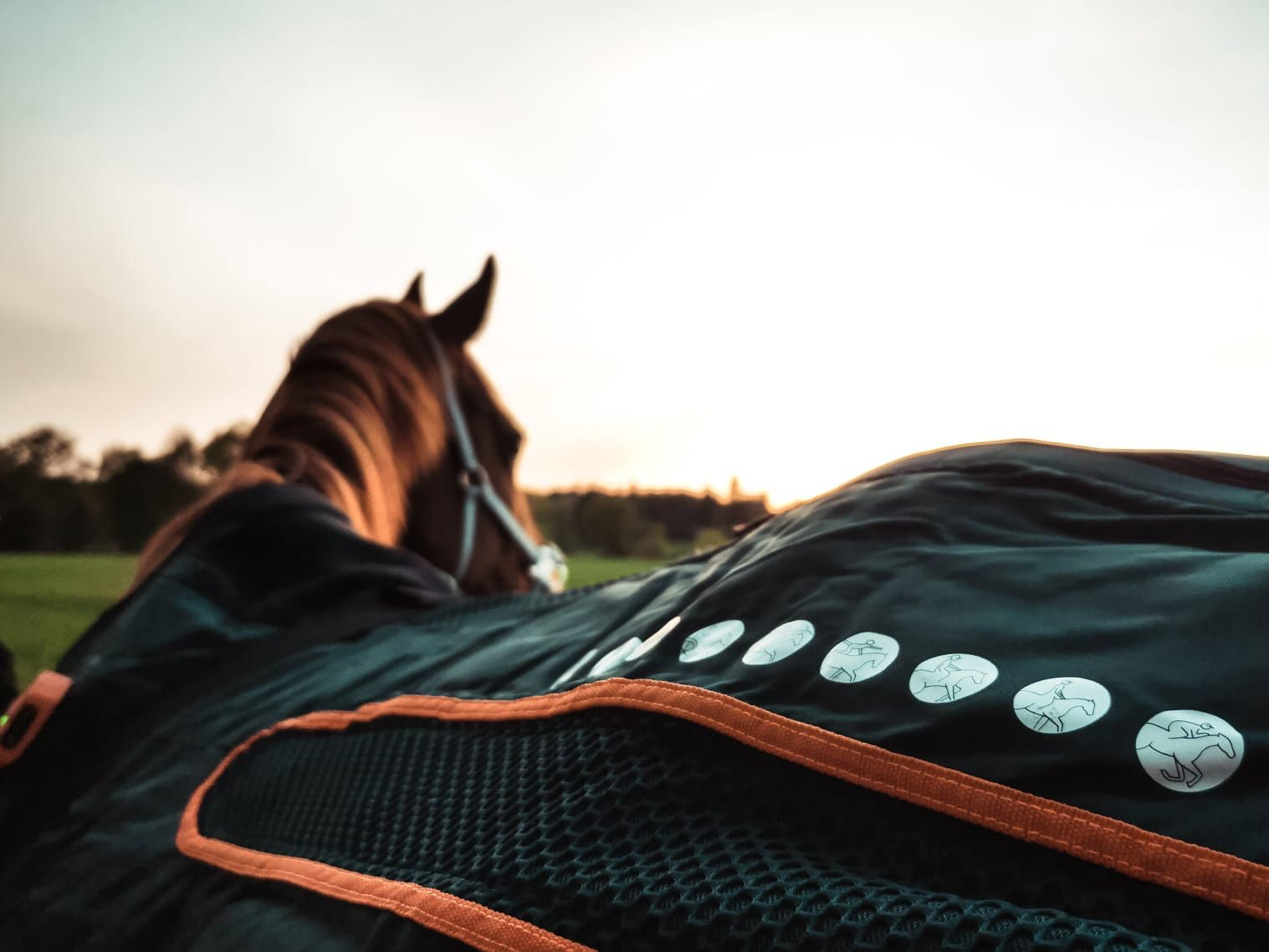Desinfektion für die Pferdehaltung - VetClean Nordheide